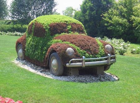 Beetle Garden