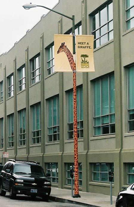 Meet A Giraffe 2
