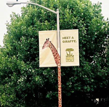 Meet A Giraffe 3